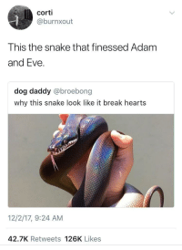 Adam and Eve, Blackpeopletwitter, and Break: corti  @burnxout  This the snake that finessed Adam  and Eve.  dog daddy @broebong  why this snake look like it break hearts  12/2/17, 9:24 AM  42.7K Retweets 126K Likes <p>The forbidden fruit (via /r/BlackPeopleTwitter)</p>