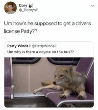 Coyote, Relatable, and Bus: Cory  @_ihateyal  Um how's he supposed to get a drivers  license Patty??  Patty Windell @PattyWindell  Um why is there a coyote on the bus?? 🤷‍♂️🤷‍♂️🤷‍♂️