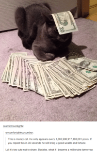 money cat: cosmicmoonlightx:  uncomfortablecucumber:  This is money cat. He only appears every 1,383,986,917,198,001 posts. If  you repost this in 30 seconds he will bring u good wealth and fortune.  Lol it's too cute not to share. Besides. what if i become a millionaire tomorrow.