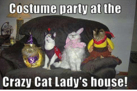 Cats, Crazy, and Dank: Costume party at the  Crazy Cat Lady's house!