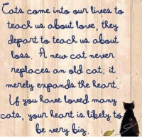 Cats, Love, and Memes: Cota come into  teac uA about love, they  deport to teach ua about  A new, cat never  neracen an old cat;  merely exponda the Reart  Rouse lensed many  cota, Your Reant likel Cats come into our lives to teach us about love <3