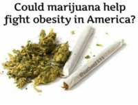 """Could marijuana help  fight obesity in America? Marijuana might have earned a reputation for giving people """"the munchies"""", driving them to crave snackfoods while under the influence, but a new study shows that the drug could actually be a surprisingly effective way to help combat the obesity epidemic that is killing Americans. A study published in the Journal of Mental Health Policy and Economics shows that regular marijuana users actually have a lower BodyMassIndex (BMI) than those who do not use the drug. For the study, researchers from the University of Miami examined data from the National Longitudinal Survey of Adolescent Health. They found that women who used marijuana on a daily basis had a 3.1 percent lower BMI and male users had a 2.7 percent lower BMI than those who do not use marijuana. This study is not the first one to find such a link. A study published in the American Journal of Medicine in 2013 uncovered how marijuana manipulates the body's insulinproduction, transforming the metabolism into a well-oiled machine of sorts to keep obesity at bay. The researchers from the University of Nebraska College of Medicine, Omaha, and the Harvard School of Public Health found that current marijuana use was linked to fasting insulin levels that were 16 percent lower. They also discovered significant associations between the use of marijuana and a smaller waist circumference."""