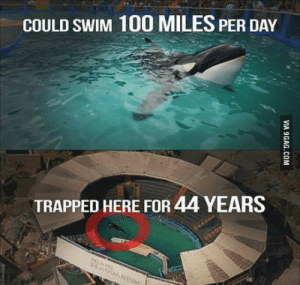 Anaconda, Whale, and Killer Whale: COULD SWIM 100 MILES PER DAY  TRAPPED HERE FOR 44 YEARS Killer whale