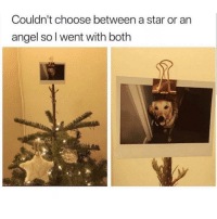 Angel, Star, and Today: Couldn't choose between a star or an  angel sol went with both Who else is decorating today?
