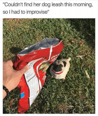 """Memes, 🤖, and Page: """"Couldn't find her dog leash this morning,  so I had to improvise"""" Me to me everyday 