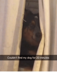 Our page @doggosdoingthings is all funny dog videos like this . Submission: @sarahlizzyy: Couldn't find my dog for 20 minutes Our page @doggosdoingthings is all funny dog videos like this . Submission: @sarahlizzyy