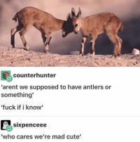 """physics takes up too much of my life tbh: counter hunter  """"arent we supposed to have antlers or  something'  """"fuck if i know'  SIXpenceee  """"who cares we're mad cute' physics takes up too much of my life tbh"""