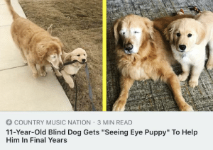 "Music, Country Music, and Help: COUNTRY MUSIC NATION 3 MIN READ  11-Year-Old Blind Dog Gets ""Seeing Eye Puppy"" To Help  Him In Final Years An old dog who recently became blind gets his very own seeing eye puppy"