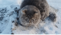 Alive, Frozen, and Memes: Couple finds a frozen kitten in the snow and saves it!  ❤️ ❤️ ❤️  UPDATE! The cat is alive and well: http://ebaum.it/2g1QwDF