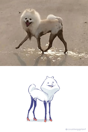 I dunno what to think about this adorable monstrosity via /r/funny https://ift.tt/2AJOnZJ: @cousineggplant I dunno what to think about this adorable monstrosity via /r/funny https://ift.tt/2AJOnZJ