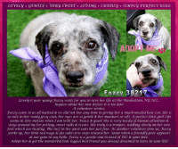 Andrew Bogut, Best Friend, and Cute: COVELyGENTCE+ VERy SWETT+ LOVING+ CuDDry SIMPLy PERFECT xoxO  ADO  Fozzy 3821  Lovely 6 year young Fozzy waits for you to save her life at the Manhattan, My ACC  Inquire about her now before it is too late!  A volunteer writes:  Fozzy came to us all matted & we did not lose any time in giving her a much-needed hair cut. She is  so cute in fher wooly grey coat, her eyes are so gentle &her manners so soft. A perfect fittle girl! Life  seems in slow motion when I am with her. Peace & quiet! She is very needy of human attention &  stays around me for petting, sweet talks & treats. She truly is a trooper, walking slowly on her sore  feet which are healing. The turf in the yard suits her just fine. As another volunteer joins us, Fozzy  perks up, her little tailwags & she takes few steps toward her. Same when a friendly peer appears  at our gate to say helo. Fozzy is a gentle soul in need of TCC & your love.  Adopt her & get the wonderful four legged best friend you alvays dreamed to have in your life! **Adopter or Foster needed ASAP**  LOVELY + GENTLE + VERY SWEET + LOVING + CUDDLY + SIMPLY PERFECT 6 year young Fozzy waits for you to save her life at the Manhattan, NY ACC. Inquire about her now before it is too late! A volunteer writes: Fozzy came to us all matted & we did not lose any time in giving her a much-needed hair cut. She is so cute in her wooly grey coat, her eyes are so gentle & her manners so soft. A perfect little girl! Life seems in slow motion when I am with her. Peace & quiet! She is very needy of human attention & stays around me for petting, sweet talks & treats. She truly is a trooper, walking slowly on her sore feet which are healing. The turf in the yard suits her just fine. As another volunteer joins us, Fozzy perks up, her little tail wags & she takes few steps toward her. Same when a friendly peer appears at our gate to say hello. Fozzy is a gentle soul in need of TLC & your love. Adopt her & get the wonderful 