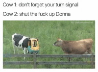 (@ship) is a must follow 🔥: Cow 1: don't forget your turn signal  Cow 2: shut the fuck up Donna  NG: The Funnylntrovert (@ship) is a must follow 🔥