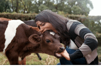 Cow eating Girl eating Cow: Cow eating Girl eating Cow