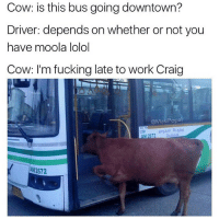 Fucking, Funny, and Meme: Cow: is this bus going downtown?  Driver: depends on whether or not you  have moola lolol  Cow: I'm fucking late to work Craig  @Masi Popa  AN2072 @masipopal was voted as top comedy meme page of 2017 🙌🏼