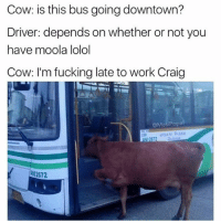 Fucking, Memes, and Work: Cow: is this bus going downtown?  Driver: depends on whether or not you  have moola lolol  Cow: I'm fucking late to work Craig  @Masi Popa (swipe) and its hush puppy BTW