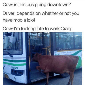 me irl: Cow: is this bus going downtown?  Driver: depends on whether or not you  have moola lolol  Cow: I'm fucking late to work Craig  @MasiPopal  ANI2672  ANI 2672 me irl