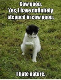 Caturday, Definitely, and Memes: Cow poop.  Yes, I have definitely  stepped in cow DooD.  I hate nature. 17 Cat Memes For Your Viewing Pleasure On Caturday
