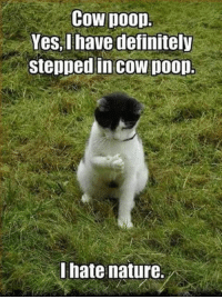 Definitely, Memes, and Poop: Cow poop  Yes,I have definitely  stepped in cow poon.  I hate nature. 56 Hilarious Memes Guaranteed To Make You Laugh 28