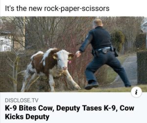 Cow, pupper, tazers: Cow, pupper, tazers