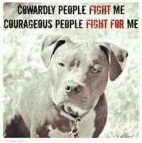 COWARDLY PEOPLE FIGHT ME  COURAGEOUS PEOPLE FIGHT FOR ME Steve Nadekow