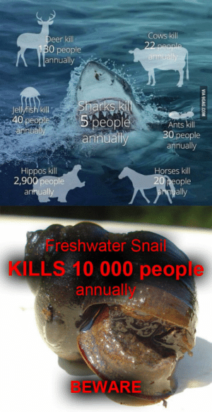Horses, Shark, and Ants: Cows kill  eer kill  130 people  annually  Jellyfish kill  40 peo  people  ann  Ants kill  0 people  annually  Hippos kill  2,900 people  Horses kill  ople  all  uall  Freshwater Snail  KILLS 10 000 people  annually  BEWARE Someone posted a sharkI add a SNAIL!