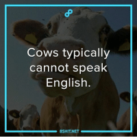 Cows typically  cannot speak  English.  8 SHIT NET a 8shit 8fact fact facts didyouknow dyk cows animals cute meme memes english