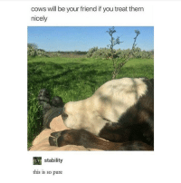 dog goes woof - Max textpost textposts: cows will be your friend if you treat them  nicely  RTT stability  this is so pure dog goes woof - Max textpost textposts