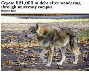 That was fast via /r/memes https://ift.tt/2L5pXtL: Coyote $21.000 in debt after wandering  through university campus  THE NEWS DESK That was fast via /r/memes https://ift.tt/2L5pXtL