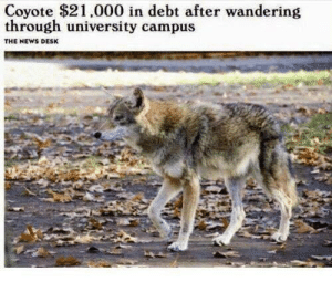 I know exactly how he feels. via /r/memes https://ift.tt/2Zd6Qon: Coyote $21,000 in debt after wandering  through university campus  THE NEWS DESK I know exactly how he feels. via /r/memes https://ift.tt/2Zd6Qon