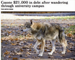 Maybe he'd qualify for an income contingent payment plan: Coyote $21,000 in debt after wandering  through university campus  THE NEWS DESK Maybe he'd qualify for an income contingent payment plan