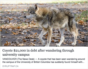 latteos: Where is the lie : Coyote $21,000 in debt after wandering through  university campus  VANCOUVER (The News Desk) - A coyote that has been seen wandering around  the campus of the University of British Columbia has suddenly found himself with...  SYRUPTRAP.CA latteos: Where is the lie
