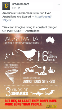 "America, Bad, and Crime: Cracked.com  hr  America's Gun Problem Is So Bad Even  Australians Are Scared -- http://goo.gl/  T3gcbE  ""We can't imagine living in constant danger  ON PURPOSE."" -- Australians   AUSTRALIA  BY THE (HORRIFYING) NUMBERS  6 FT  FOOT  TALL  MURDER  BIRDS  FIRE TORNADOES,  LIKE, EVERYWHERE  DOZENS OF KINDS OF  · uenomous snakes  KINDS OF  SHARKS  BUT HEY, AT LEAST THEY DON'T HAVE  MORE GUNS THAN PEOPLE  GRAGKED <p><a href=""http://hellmoshing.tumblr.com/post/134781235922/proudblackconservative-senpatriarch"" class=""tumblr_blog"">hellmoshing</a>:</p>  <blockquote><p><a href=""http://proudblackconservative.tumblr.com/post/134779646459/senpatriarch-proudblackconservative"" class=""tumblr_blog"">proudblackconservative</a>:</p>  <blockquote><p><a href=""http://senpatriarch.tumblr.com/post/134779499746/proudblackconservative-senpatriarch"" class=""tumblr_blog"">senpatriarch</a>:</p>  <blockquote><p><a href=""http://proudblackconservative.tumblr.com/post/134779354299/senpatriarch-proudblackconservative"" class=""tumblr_blog"">proudblackconservative</a>:</p>  <blockquote><p><a href=""http://senpatriarch.tumblr.com/post/134779289506/proudblackconservative-senpatriarch"" class=""tumblr_blog"">senpatriarch</a>:</p>  <blockquote><p><a href=""http://proudblackconservative.tumblr.com/post/134779215899/senpatriarch-proudblackconservative-i-mean"" class=""tumblr_blog"">proudblackconservative</a>:</p>  <blockquote><p><a href=""http://senpatriarch.tumblr.com/post/134779140326/proudblackconservative-i-mean-seriously-what"" class=""tumblr_blog"">senpatriarch</a>:</p>  <blockquote><p><a href=""http://proudblackconservative.tumblr.com/post/134778975484/i-mean-seriously-what-the-hell-is-this-bullshit"" class=""tumblr_blog"">proudblackconservative</a>:</p>  <blockquote><p>I mean seriously, what the hell is this bullshit? <a class=""tumblelog"" href=""http://tmblr.co/mTqbGt2RvF3TXAk_tGNG4iA"">@cracked</a> you used to at least *pretend* to be a comedy website without a glaring political affiliation. This is absolutely embarrassing.</p></blockquote>  <p>>Has a higher violent crime rate</p><p>>Actually has a plethora of illegal guns throughout the country</p><p>God damn Australia, are you all retards or just the ones who worked for Cracked?</p></blockquote>  <p>""We can't imagine living in constant danger on purpose"". Right, because people in America are literally being shot down all day every day no matter where they are constantly all of the time. Why I was shot three times just going to the grocery store for eggs this morning</p></blockquote>  <p>That's funny, while I was out jogging earlier tonight I got shot 5 times. And that was just from one car.</p><p>Australia really can't say shit about ""living in constant danger on purpose"" they live in fucking Australia.</p></blockquote>  <p>They also can't say shit because they don't even have a bill of rights. Forgive me if I'm not taking any morality lessons from a country that pretty much makes up human rights as it goes along.</p></blockquote>  <p>I didn't know that, but to me it doesn't matter. I look at things much more individually though, so maybe that's why.</p><p>But Australia seriously doesn't have a bill of rights? Does the government there know it could become a horrible dictatorship legally in their country? That's fucked up, someone might want to get on that.</p></blockquote>  <p>""Unlike most similar liberal democracies, Australia has no Bill of Rights to protect human rights in a single document. Rather rights may be found in the Constitution, common law and legislation - Acts passed by the Commonwealth Parliament or State or Territory Parliaments.""</p><p>Direct quote from an Australian government website. Basically human rights can be found in ""common law"" and whatever else the government decides you deserve at any given moment. Basically Australia can screw right off with its sanctimonious blathering about human rights when they don't even have a clear definition of them.</p></blockquote>  <p>The view that non-Americans have of us that, since we have highly publicized crimes, everyone must be living in a war zone is the same view that non-Californians have that, because we get rare earthquakes that cause serious damage, we must be constantly dodging debris from falling skyscrapers, except in this analogy, it ends with people from the east coast trying to pass laws saying we have to replace all our buildings with styrofoam</p><p>It'd be kinda funny if it wasn't so annoying</p></blockquote>  <p>Seriously I pretty much tune out whenever someone from a different country starts weighing in on American gun and tax issues. If I gave a shit what your country thought, I would live there.</p>"