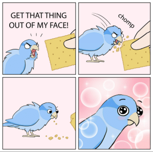 Cracker Bird Meme (But I cleaned the chicken thoughts): Cracker Bird Meme (But I cleaned the chicken thoughts)
