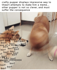 get thos memes OFF: crafty pupper displays impressive way to  thwart attempts to make him a meme...  other pupper is not so clever, and must  suffer the consequence  orf  orf  bor bor  orfborf borf  bonf  orf bor  borf borf  borf  borf  son of a or  borf  borf  borf borf  orf b Or  rf  ort  or  borf  borf  borf get thos memes OFF