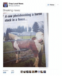 This is awesome!: Crap Local News  acrapLocal News  Breaking news:  A cow photobombing a horse  stuck in a fence...  We Know Meme  RETWEETS LIKES  209  277  Follow This is awesome!