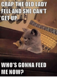 Old Lady Meme: CRAP THE OLD LADY  FELL AND SHE CAN'T  GET UP  WHO'S GONNA FEED  ME NOW?
