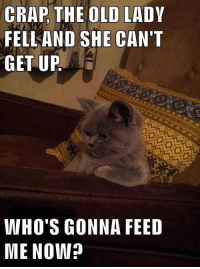 Old Lady Meme: CRAP THE OLD LADY  FELLAND SHE CAN'T  GET UP  WHO'S GONNA FEED  ME NOW?
