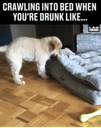 Drunk, Memes, and Bible: CRAWLING INTO BED WHEN  YOU'RE DRUNK LIKE  LAD  BIBLE 'Why is everything spinning?' @jupiter_thegolden