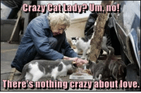 Memes, 🤖, and Lad: Crazy Cat Lad VPUm, no!  Theres nothing crazy aboutdove
