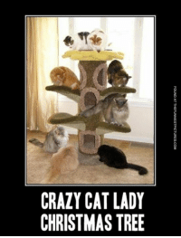 Memes, Christmas Tree, and 🤖: CRAZY CAT LADY  CHRISTMAS TREE  FOUND AT THEFUNNIESTPICTURES-COM  YE  TS  AA  CM  ZS  AR  Dn Un  CC