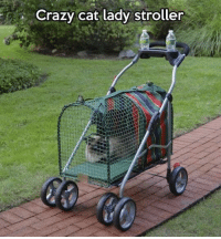 Memes, 🤖, and Cat: Crazy cat lady stroller This is next level crazy cat lady 😂