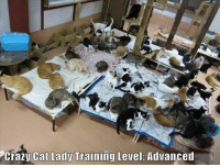 Cats, Crazy, and Memes: Crazy Cat Lady Training Level: Advanced