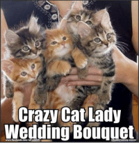 You can't have a crazy cat lady wedding cake without a crazy cat lady wedding bouquet (just don't throw it!): Crazy Cat Lady  Wedding Bouquet  www.facebook.com/cat.addicts  catoddictsanony-mouse You can't have a crazy cat lady wedding cake without a crazy cat lady wedding bouquet (just don't throw it!)