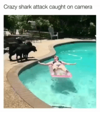 Crazy, Memes, and The Worst: Crazy shark attack caught on camera  Lo Those fuzzy pool sharks are the worst! | @cuteandfuzzybunch