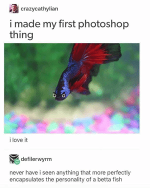 Love, Photoshop, and Fish: crazycathylian  i made my first photoshop  thing  i love it  defilerwyrm  never have i seen anything that more perfectly  encapsulates the personality of a betta fish 1 2 3 4 5 6 7 8 9 10 11 12 13 14 15 16 17 18 19 20 21 22 23 24 25 26