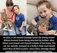 Animals, Home, and Jumped: @crazyy.factss  In 2014, a cat named Smudge saved his young owner  (Ethan Fenton) from being attacked by bullies. After  Ethan was teased and shoved outside of his home, the  cat ran outside, jumped on a bully's chest and hissed  until they all fled in panic. Since then, Smudge sleeps  outside Ethan's room every night to protect him. We don't deserve animals