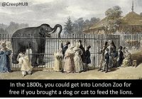 Cats, Creepy, and Dogs: @CreepHUB  In the 1800s, you could get into London Zoo for  free if you brought a dog or cat to feed the lions. I'd rather just pay the entry fee tbh. • • • • CreepHUB • • • • • • • • • • • • • • • • • • • • • • • • • • • • • • • ----------------------------------------- -------------------- horrorstories horrorstory horrorfacts horrorfact creepypasta unknownfact horrorstories horrorstory horrorfacts horrorfact creepypasta unknown horrifyingthing things scary scarystories creepystories creepy creepyfacts creepyfact scaryfacts scaryfact horrorstories horrorstory horrorfacts horrorfact creepypasta unknownfact horrorstories horrorstory horrorfacts horrorfact creepypasta unknownu horrifyingthing things conspiracy theories theory theoryconspiracy conspiracytheory conspiracytheories
