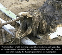 Creepy, Memes, and Taken: @CreepHUB  This is the body of a 20 foot long unidentified creature which washed up  on the Sakhalin shoreline in far east Russia in the year 2006. The creature  was taken away by the Russian special forces for investigation. What do you guys think it was? • • • • CreepHUB • • • • • • • • • • • • • • • • • • • • • • • • • • • • • • • ----------------------------------------- -------------------- horrorstories horrorstory horrorfacts horrorfact creepypasta unknownfact horrorstories horrorstory horrorfacts horrorfact creepypasta unknown horrifyingthing things scary scarystories creepystories creepy creepyfacts creepyfact scaryfacts scaryfact horrorstories horrorstory horrorfacts horrorfact creepypasta unknownfact horrorstories horrorstory horrorfacts horrorfact creepypasta unknownu horrifyingthing things conspiracy theories theory theoryconspiracy conspiracytheory conspiracytheories