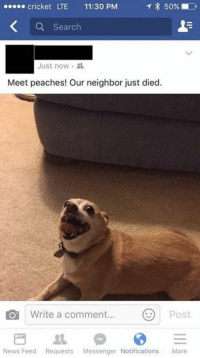Dank, Messenger, and Neighbors: cricket LTE 11:30 PM  T 50%  a Search  Just now.  Meet peaches! Our neighbor just died.  O Write a comment  Post  News Feed Requests  Messenger Notifications  More This is my favorite dog pic ever