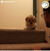 This puppy learning how to use the stairs has the best teacher! 🐶💕  https://t.co/BX1OlRkDU4: Cristobal1624 This puppy learning how to use the stairs has the best teacher! 🐶💕  https://t.co/BX1OlRkDU4